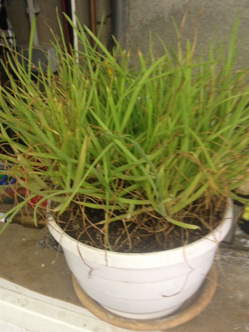 Pflanze - (Pflanzen, Pflanzensaft)