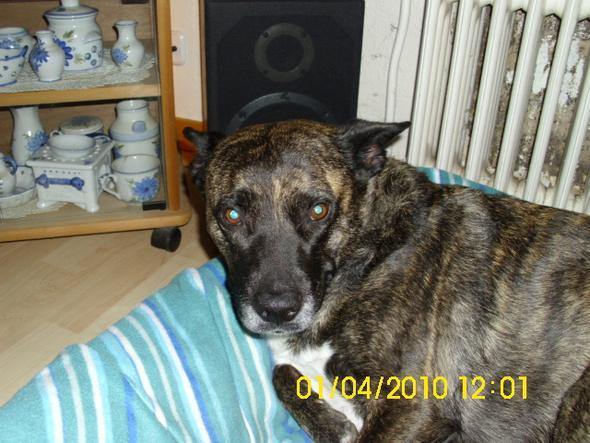 Ula  - (Hund, Listenhunde, Auslandsreise)