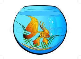 Kann ich 2 fische in einem zeichentrick aquarium zuchten for Rundes aquarium