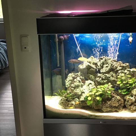 Das Becken - (Aquarium, Filter, Pumpe)