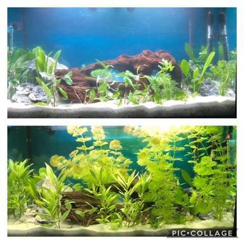 Kann ich Fische einsetzen?