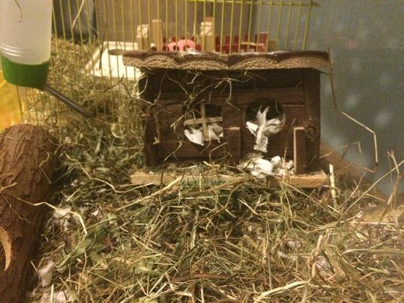 Kann ich für meine Hamster playmobil Sachen verwenden?