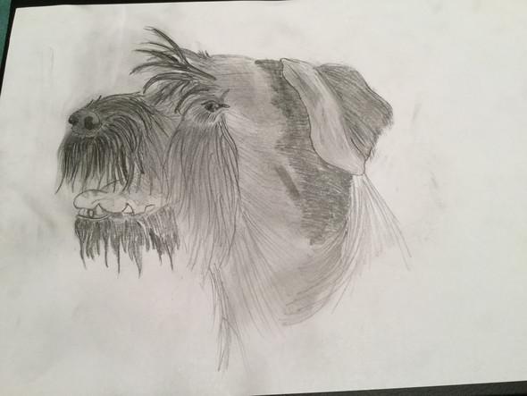 Bleistift  (Hund) - (malen, Talent)