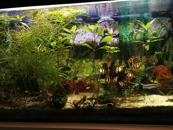 kann ich in den becken noch weiteretiere einsetzen tiere aquarium zierfische. Black Bedroom Furniture Sets. Home Design Ideas