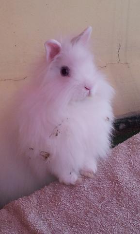 süße Flauschi - (Kaninchen, Schnupfen, Anstecken)
