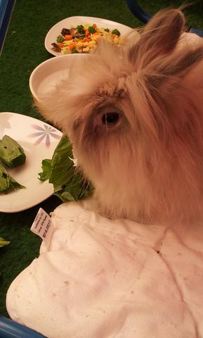 süßer Toffie - (Kaninchen, Schnupfen, Anstecken)