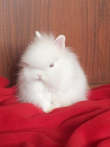 Flauschi als baby - (Kaninchen, Schnupfen, Anstecken)
