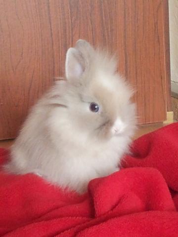 toffie als baby - (Kaninchen, Schnupfen, Anstecken)