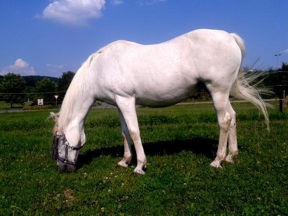 Leika vor ca einem Jahr - (Pferde, reiten, Senkrücken)