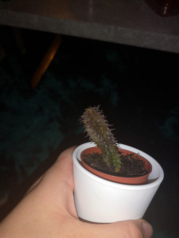 Kann ich meinen Kaktus noch retten?