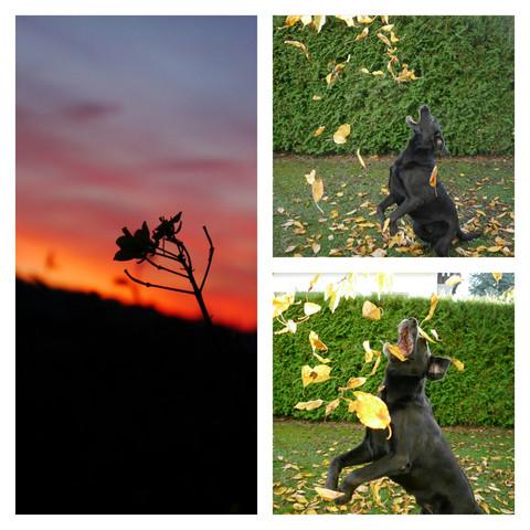 (Mein Hund, Sonnenuntergang) - (Fotografie, instagram)