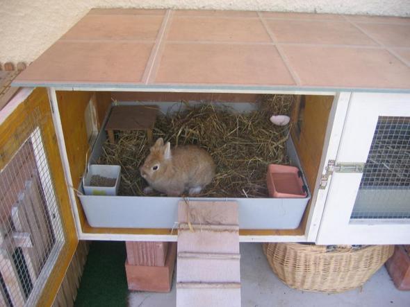 kann ich zu meinem kaninchen zwei meerschweinchen dazu kaufen. Black Bedroom Furniture Sets. Home Design Ideas