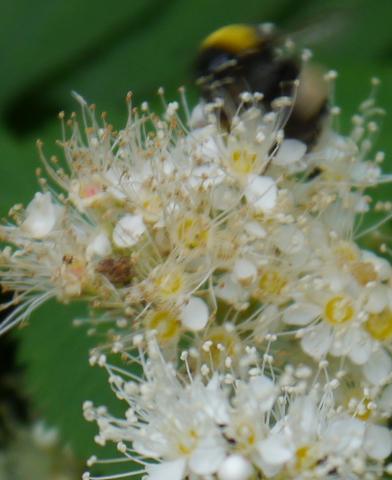 Blüte - (bestimmen, bluete)