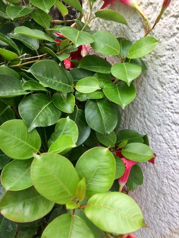 Blattwerk - (Biologie, Pflanzen)
