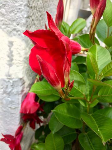 Blütenbild - (Biologie, Pflanzen)