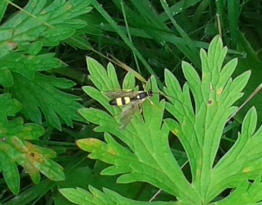 Nicht indentifiziertes Flugobjekt - (Insekten, schwarz, gelb)