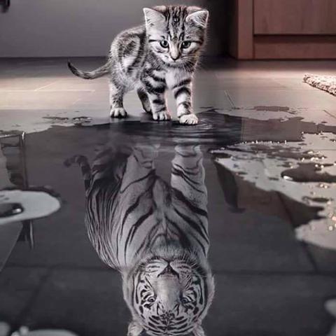 Kann Jemand Eine Spruch Für Dieses Bild Sagen Katze