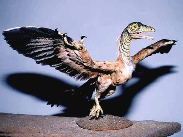 Kann Kreationismus die noch vorhandenen Lücken in der Evolution schließen?