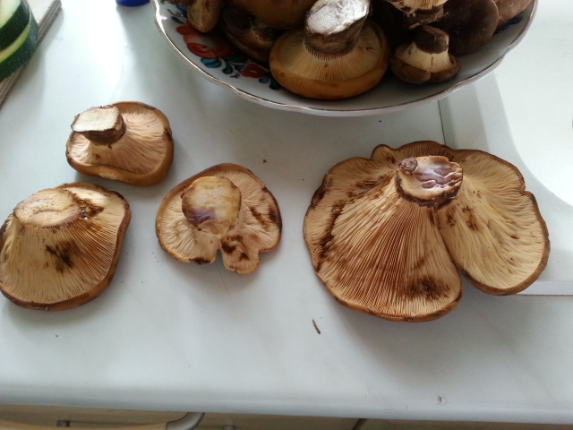 Kann Man Das Essen? Sind Diese Pilze Giftig? Wie Heißen