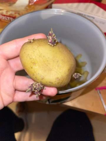 Kann man die Kartoffel so noch essen?