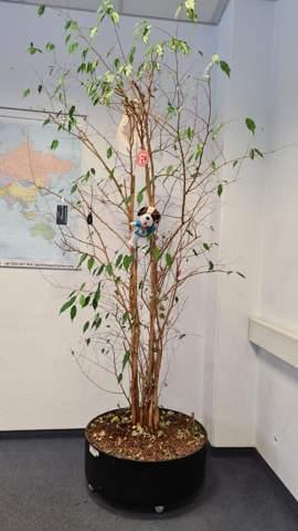 Kann man diesen Baum noch retten?