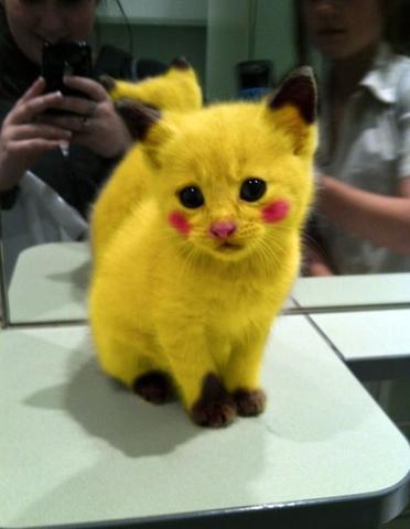 Pika - (Tiere, Hund, Katze)