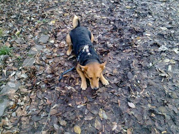 Jasmin - (Hund, Leistung, Hundeerziehung)