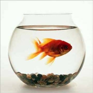 kann man einen fisch in einem glas halten tiere. Black Bedroom Furniture Sets. Home Design Ideas