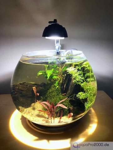Kann man einen Goldfisch wie in Filmen im Glas halten?