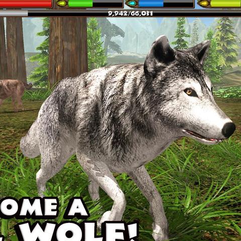 simulator rudel aufnehmen - (aufnehmen, Simulator, Wolf)