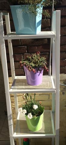 Kann man vertrocknete Nelken (balkonpflanzen) retten? Wenn ja was muss ich tun?
