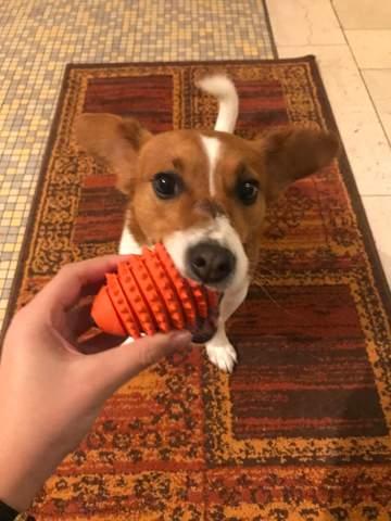 Kann mein Hund dieses Spielzeug verschlucken?