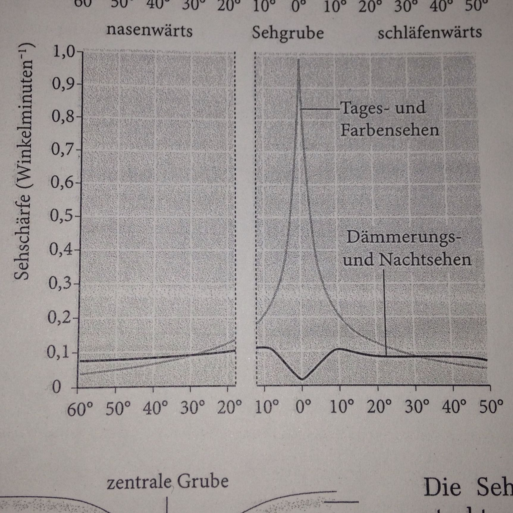 Kann mir bitte jemand dieses Diagramm erklären? (Biologie, Augen ...