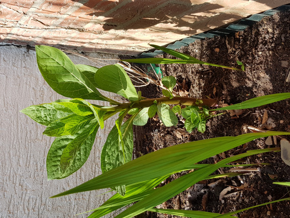 kann mir einer sagen was das f r eine pflanze ist siehe foto pflanzenbestimmung pflanzen. Black Bedroom Furniture Sets. Home Design Ideas