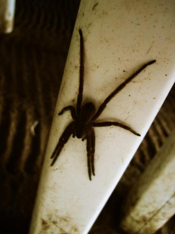Spinne 1 - (Tiere, Biologie, Spinnen)