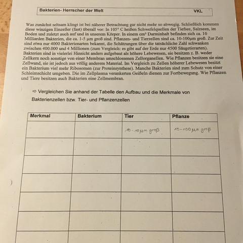Kann mir jemand bei Bio helfen (Bakterien)? (Schule, Biologie ...