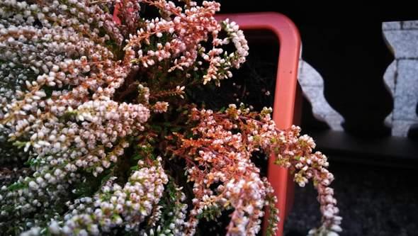 Kann mir jemand bei der Pflanzenauswahl helfen und wie man verhindern kann das eingehen 😟?