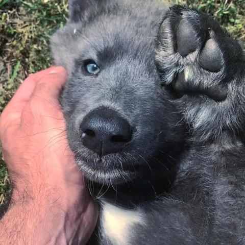 Kann mir jemand bei der Suche nach dieser Hunderasse helfen?