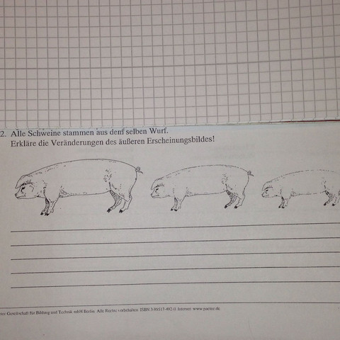 Bild zur Aufgabe - (Schule, Biologie, Aussehen)