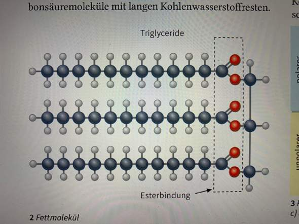 Kann mir jemand den Aufbau dieses Fettmoleküls beschreiben?