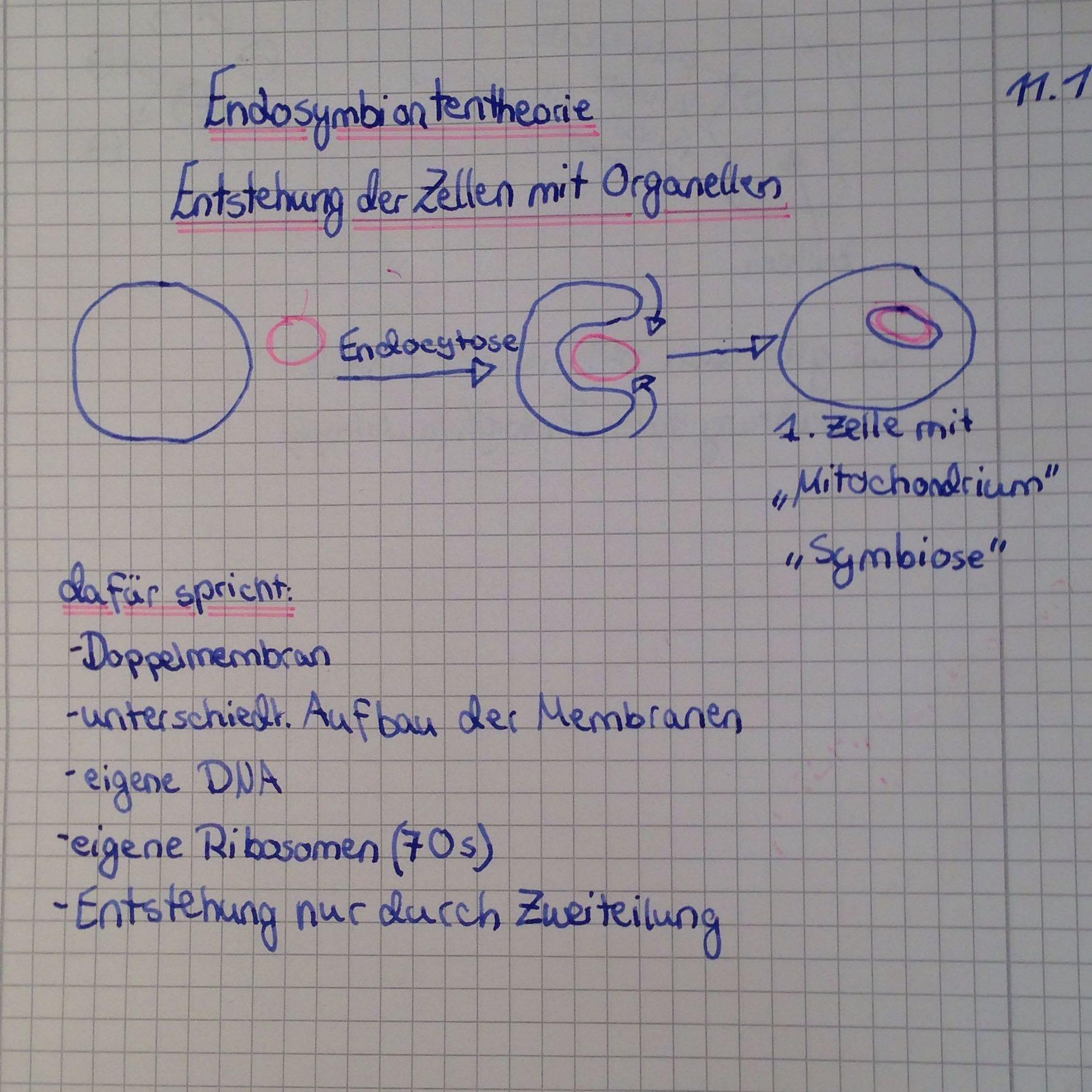 Kann mir jemand die endosymbiontentheorie erklären? (Biologie, Test)