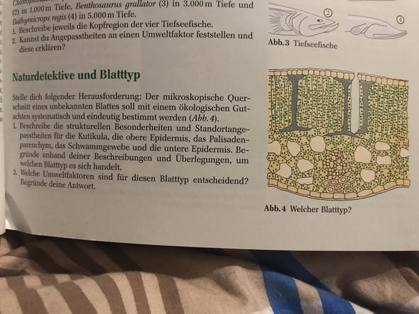 - (Biologie, Blatt)