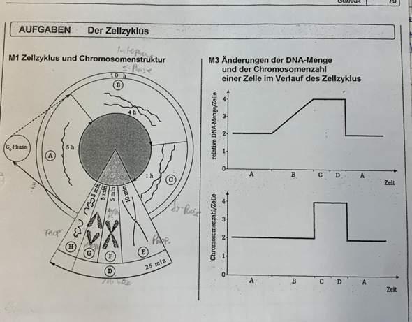 Kann mir jemand erklären was genau an M3 falsch ist?