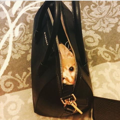 Kann mir jemand sagen ob die Tasche echt ist oder wie teuer die ist?