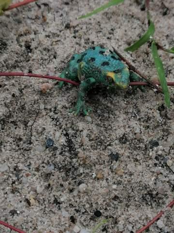 Kann mir jemand sagen was das für ein Frosch ist?