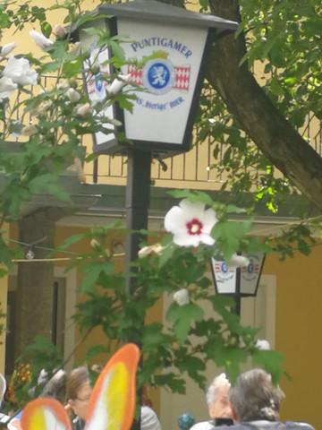 - (Blumen, bluete)