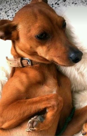 dieser Hund  - (Hund, Rasse)