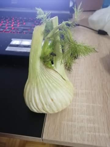 Kann mir jemand sagen was für eine Knolle das ist oder zwiebel?
