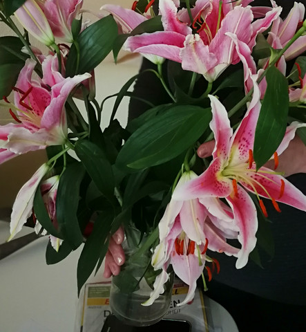 Kann Mir Jemand Sagen Wie Diese Blumen Auf Dem Foto Heißen