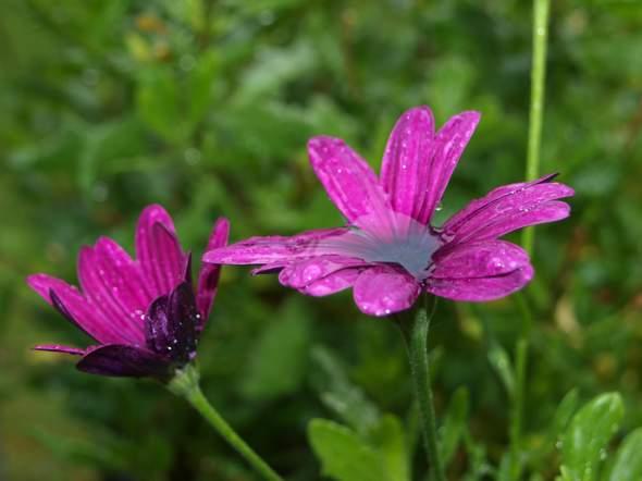 Kann mir jemand sagen wie diese hübsche Blume heißt?